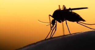 Los motivos de la invasión de mosquitos en La Costa